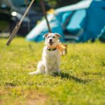 Hunde sind willkommen bei SOMMERJUNG, dem Ferienlager für Erwachsene