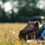 Schlafen, Ausruhen und im Gras liegen bei SOMMERJUNG, dem Ferienlager für Erwachsene
